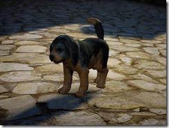 bdo-tier-3-dog-10