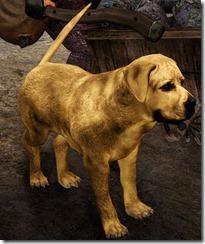 bdo-tier-3-dog-41