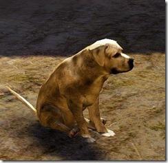 bdo-tier-3-dog-6
