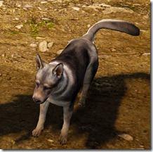 bdo-tier-4-dog