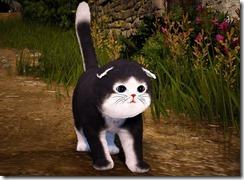 skunkcat