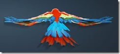 Scarlet Macaw Back
