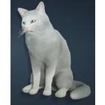 [Tier 1] White Shorthair Cat