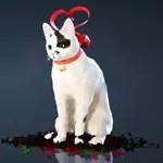 [Tier 1] Ribbon Cat
