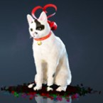 [Tier 1] Ribbon Cat