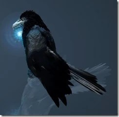 Crow Appearance 3