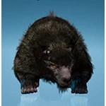 Kamasylvia Brown Bear