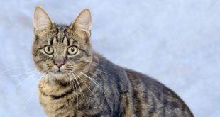 A CIB ismét kutyáknak és cicáknak segít otthonra találni