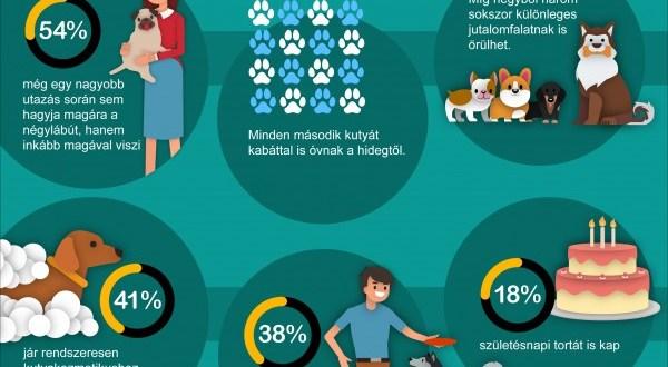 Felmérés: a kötelező oltás csak minden második kutyavásárlónak fontos szempont
