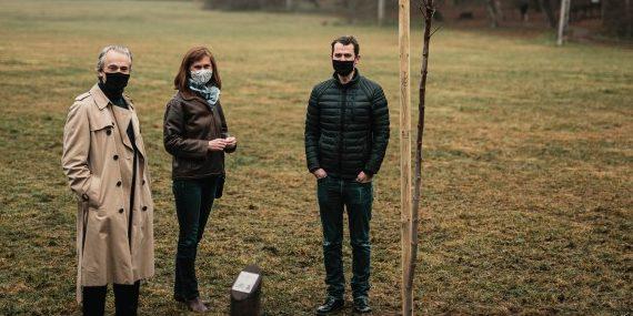50 000 új facsemete a Pilisi Parkerdőben – így ünnepel a Citi Magyarországon