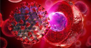 A köldökzsinór eredetű őssejtek hozzájárulhatnak a koronavírus fertőzés gyógyításához?