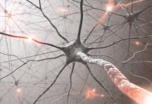 Biological neurons