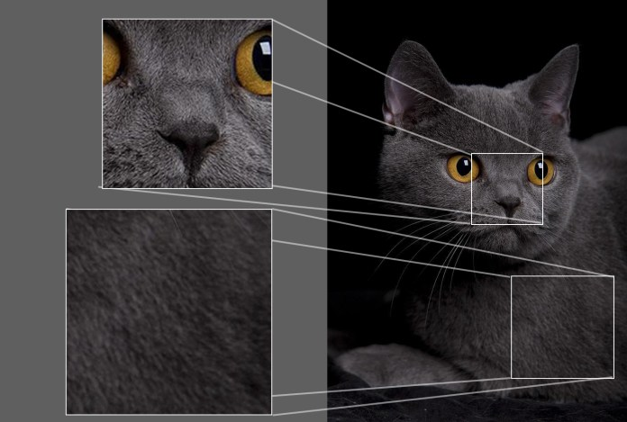 cat dissect - Computer Vision: Why It's Hard To Compare AI And Human Perception