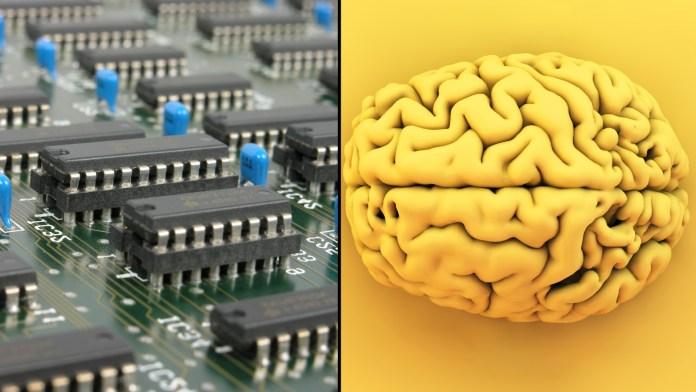cerebro vs circuitos integrados