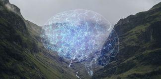 brain nature