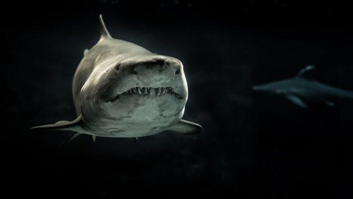 shark natural selection