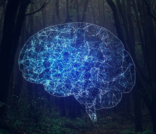 rewards artificial intelligence nature
