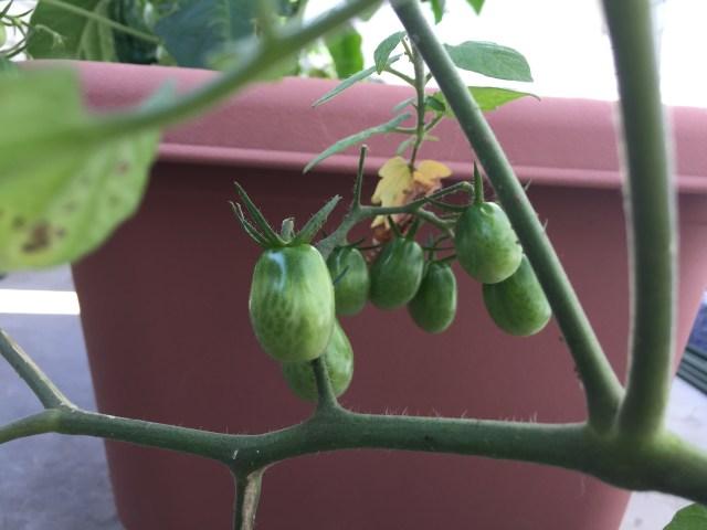 コピーライターは、Webでも野菜でも育てるのがお好き?
