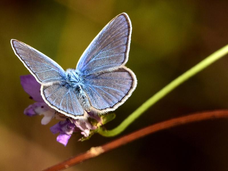 Mariposa fauna del Parc de Collserola, cerca de BeCorp Sant Just Desvern pisos de alquiler