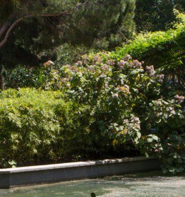 Adéntrate en la vegetación del Parque de la Pegaso