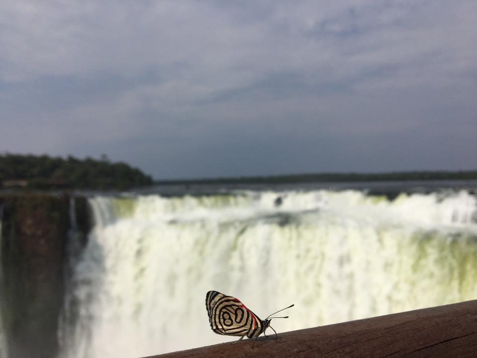 Photo of a butterfly enjoying the views of the Devils Throat Chasm.