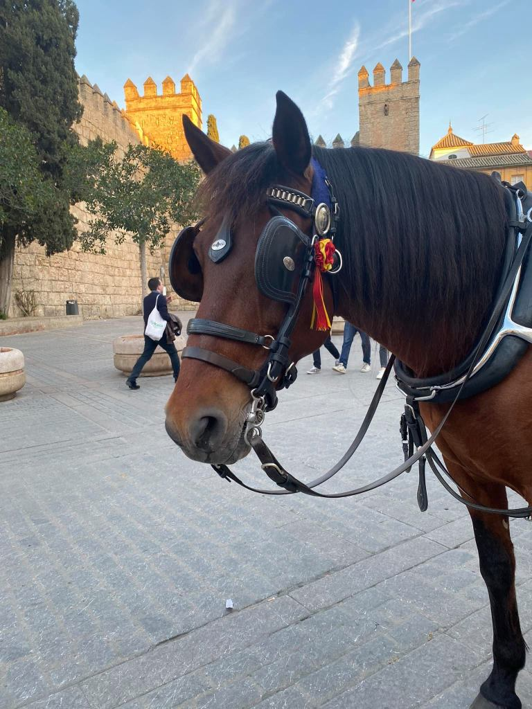 Photo of Luna, the carriage horse that showed us round Seville