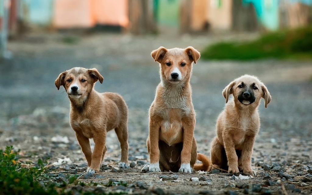 3 cute puppy dogs