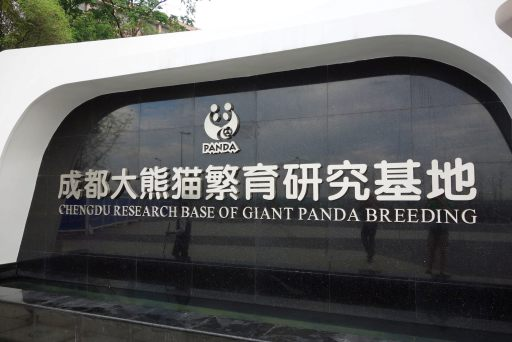 Welcome to the Chengdu Research Base of Giant Panda Breeding