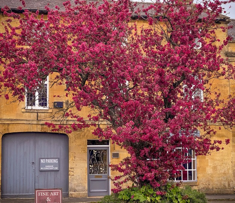 Moreton-in-Marsh in all it's Spring glory. Lovely deep pink tree in front the honey brown Cotswold stone