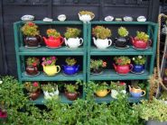 Tea pot herb garden