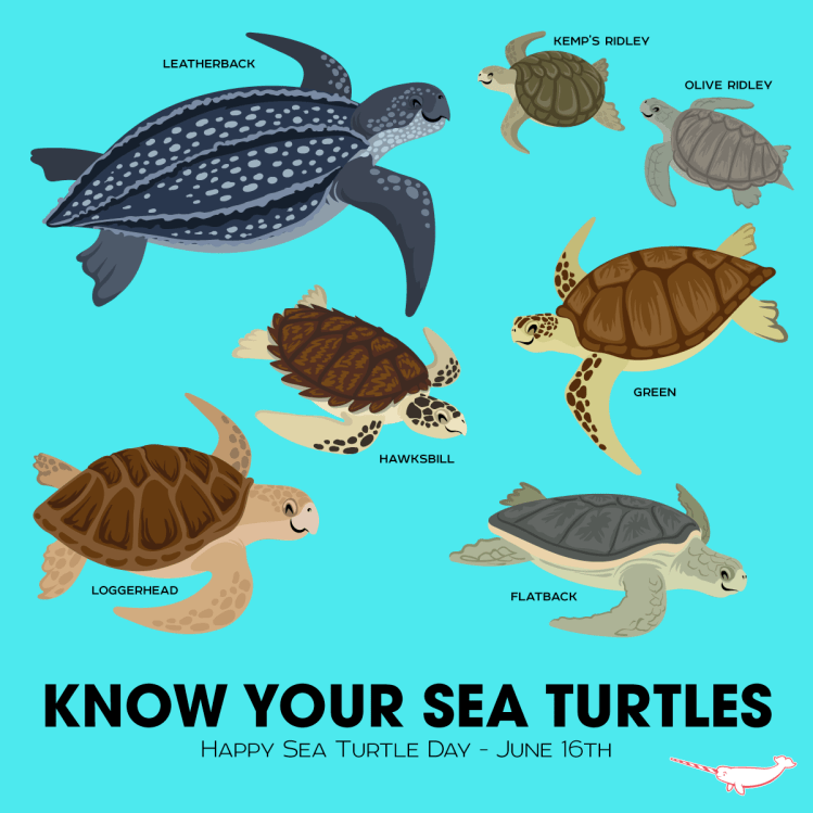know-your-sea-turtles
