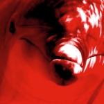 Dolphin Rape Cave – More Than A Myth?
