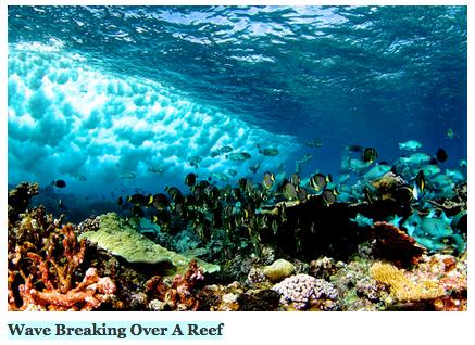 reef wave breaking