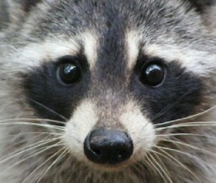 how to avoid raccoon eyes while tanning