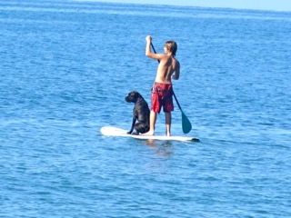 paddle boarding mexico with dog