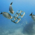 Edible Six-Pack Rings – Enjoy Beer, Save Wildlife