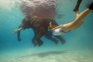 swimming with an elephant