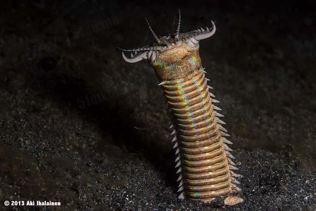 weird underwater worm