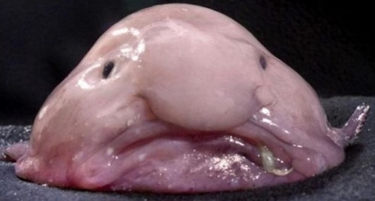 world's weirdest looking fish