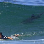 Top 10 Most Shark Infested Beaches