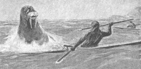 greenlandic kayak with walrus