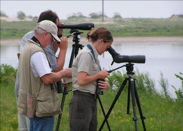 birdwatching spotting scope buying guide