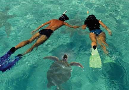 molokini-snorkel-tour-turtle