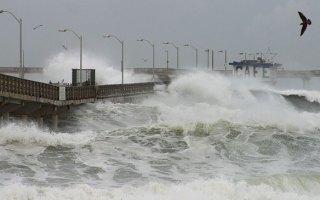 how storm surges affect birds