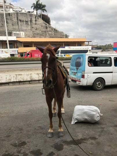 Bucerias Mexico horse