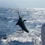 Fishing in Banderas Bay Mexico