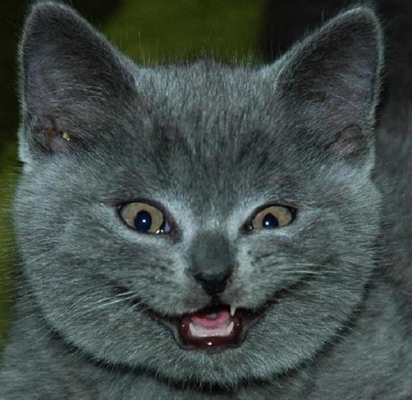 cat making weird face