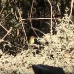 Birdwatching and Hot Springs of Ixtlan in Sierra de Vallejo Compostela, Nayarit, Mexico