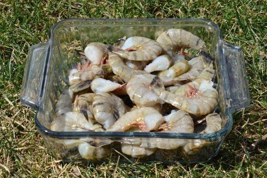 secret_catfish_bait_spoiled_shrimp