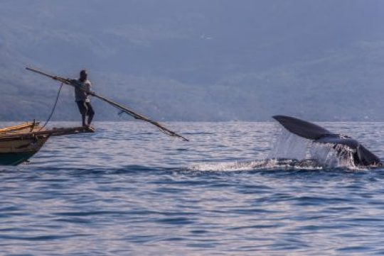 lamalerans whale hunting with harpoon